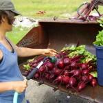 Sarah washing beets