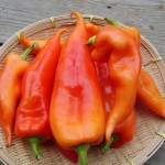 Hungarian Peppers aka Paprika