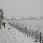 snow vines walk
