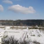 sativa snow