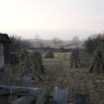 Transylvanian corn feild